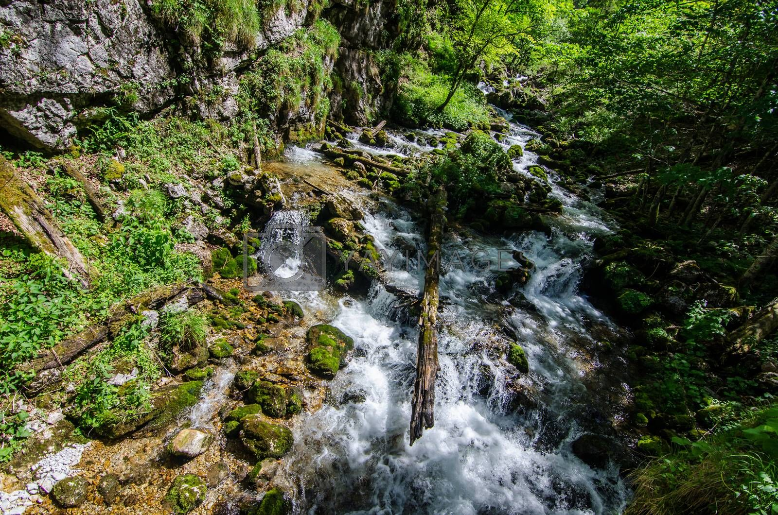 Royalty free image of Wild brook in the forest by thomaseder