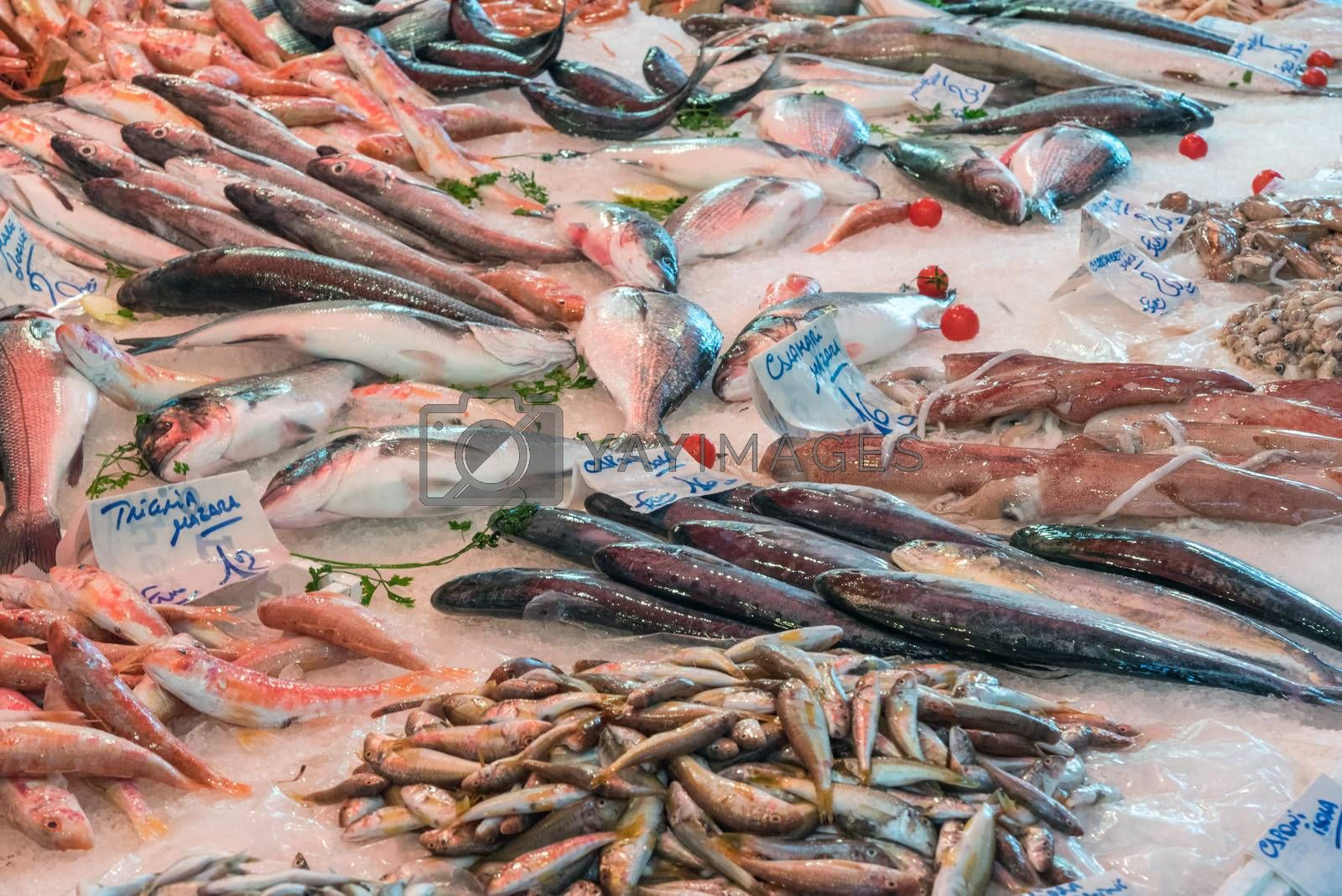 Fresh fish and seafood seen at a market in Palermo, Sicily