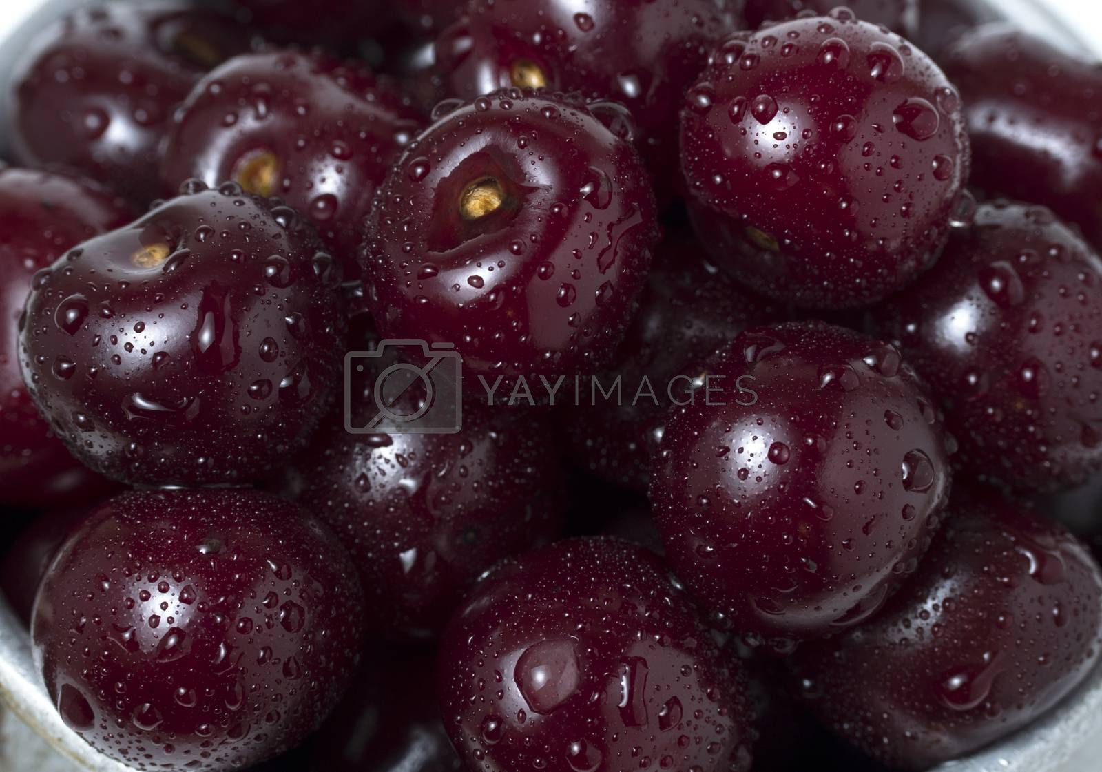 Royalty free image of Fresh ripe cherries with water drops, as background.  by phortcach