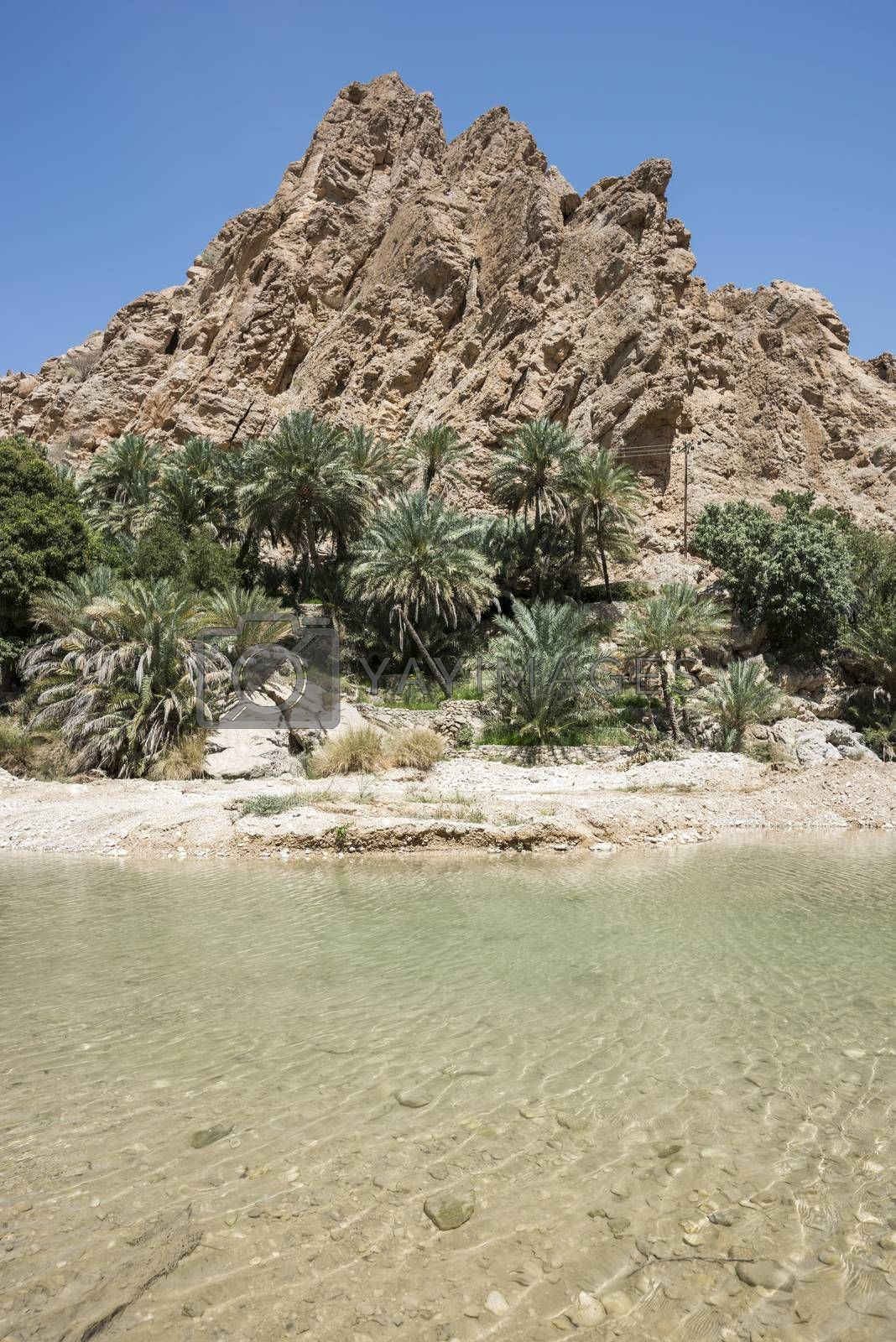 River (with turquoise water) coming from the canyon of Wadi Bani Khalid and going to the main village, Oman