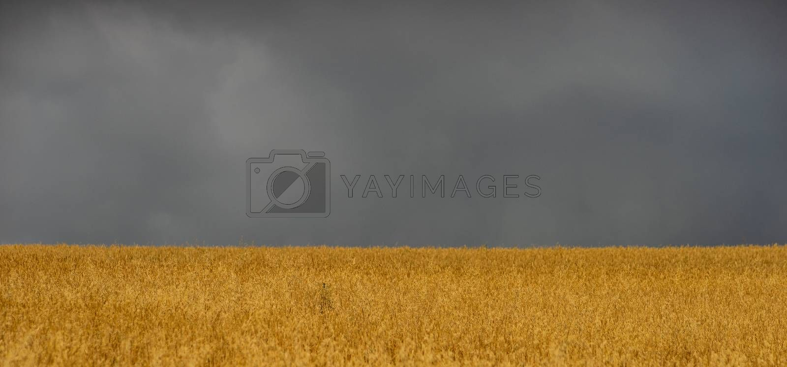 Rural Kakhetian landscape in Georgia with the fields and sky