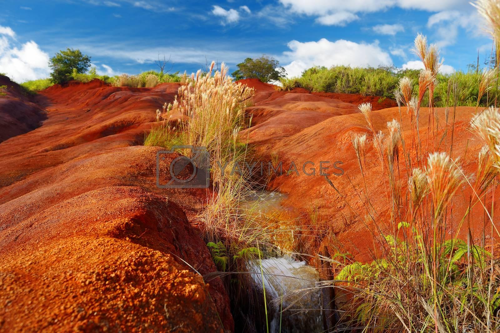 Famous red dirt of Waimea Canyon in Kauai, Hawaii