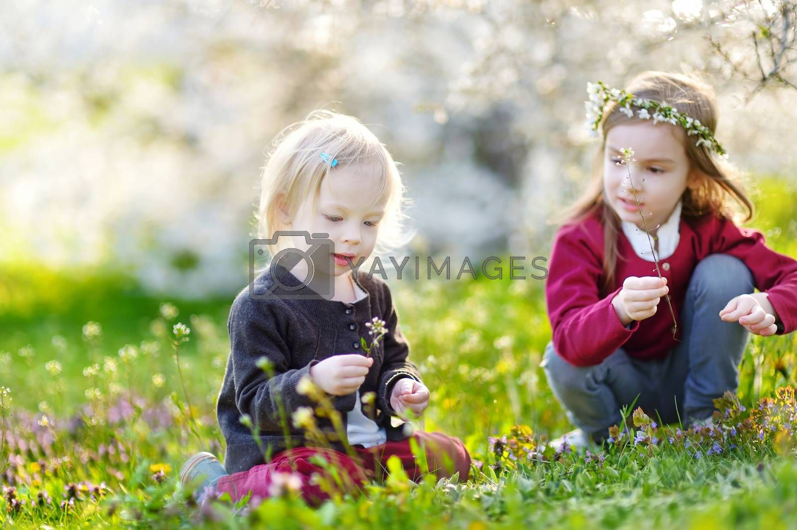 Two cute little sisters in blooming cherry garden on beautiful spring day