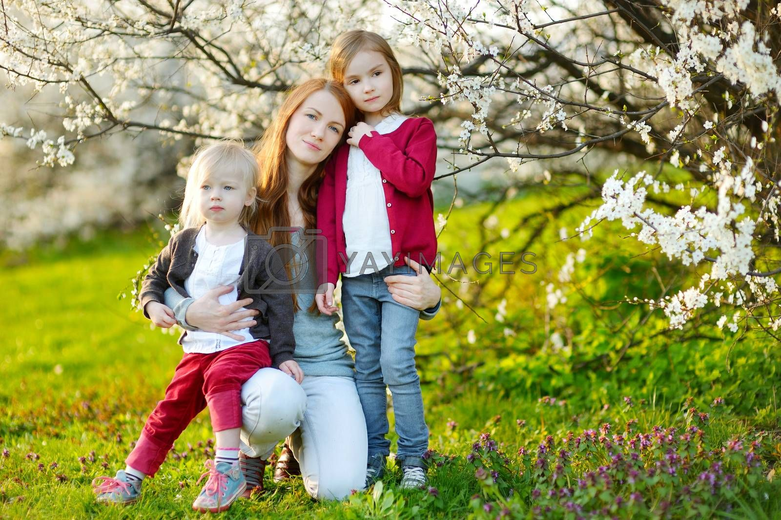 Young mother and her children in blooming cherry garden on beautiful spring day