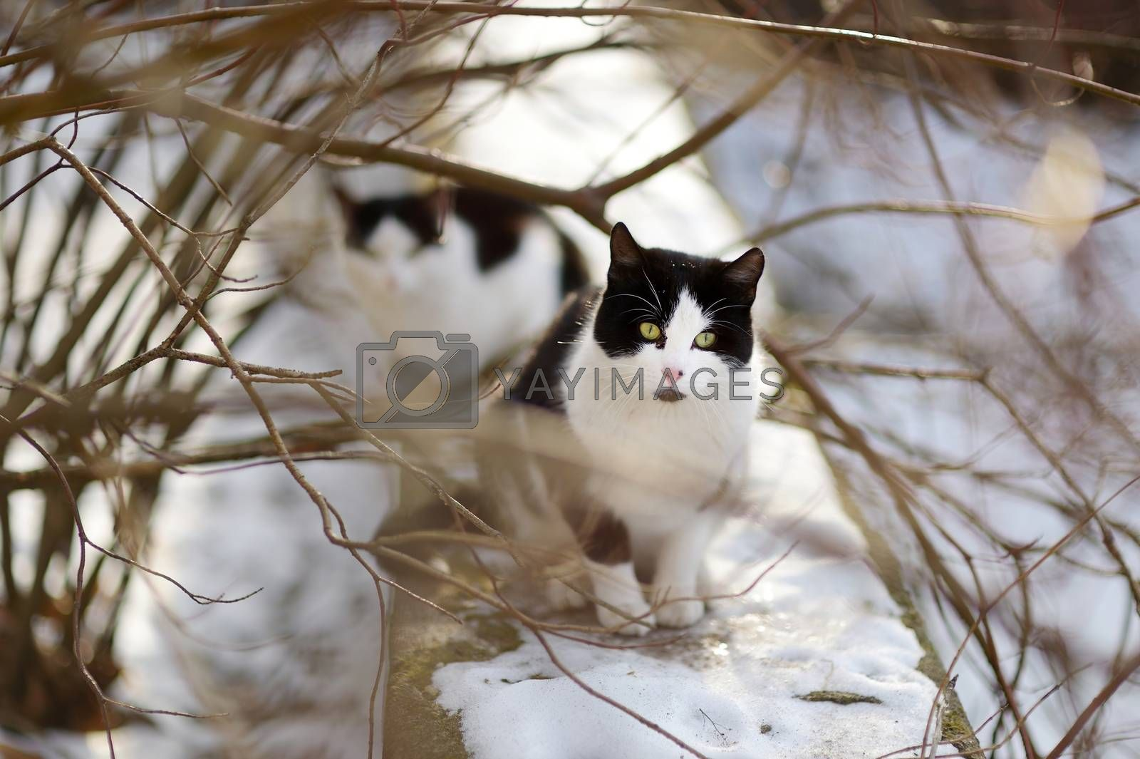 Two cute cats waiting for spring to come