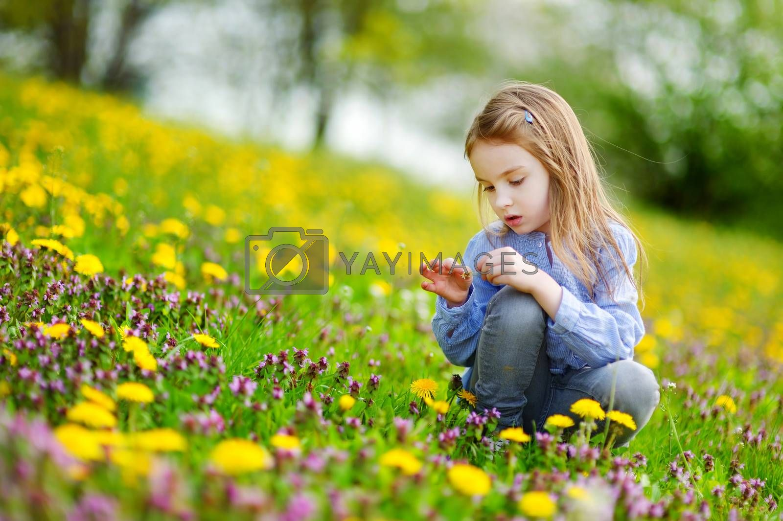 Adorable little girl in blooming dandelion flowers
