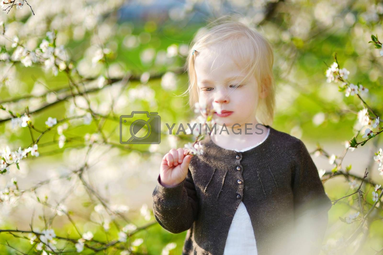 Adorable toddler girl in blooming cherry garden on beautiful spring day