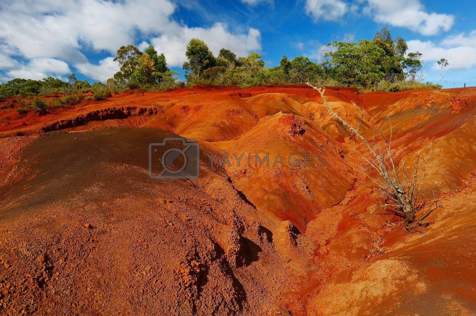 Famous red dirt of Waimea Canyon in Kauai, Hawaii