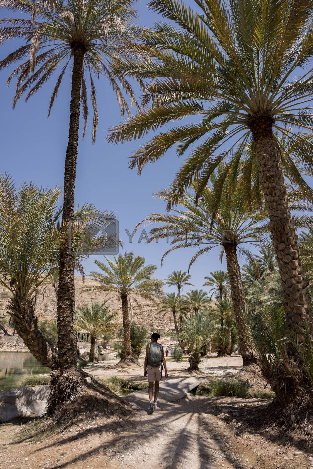 Woman (tourist) walking under palm trees near the main pool  of the famous Wadi Bani Khalid in the Sultanate of Oman