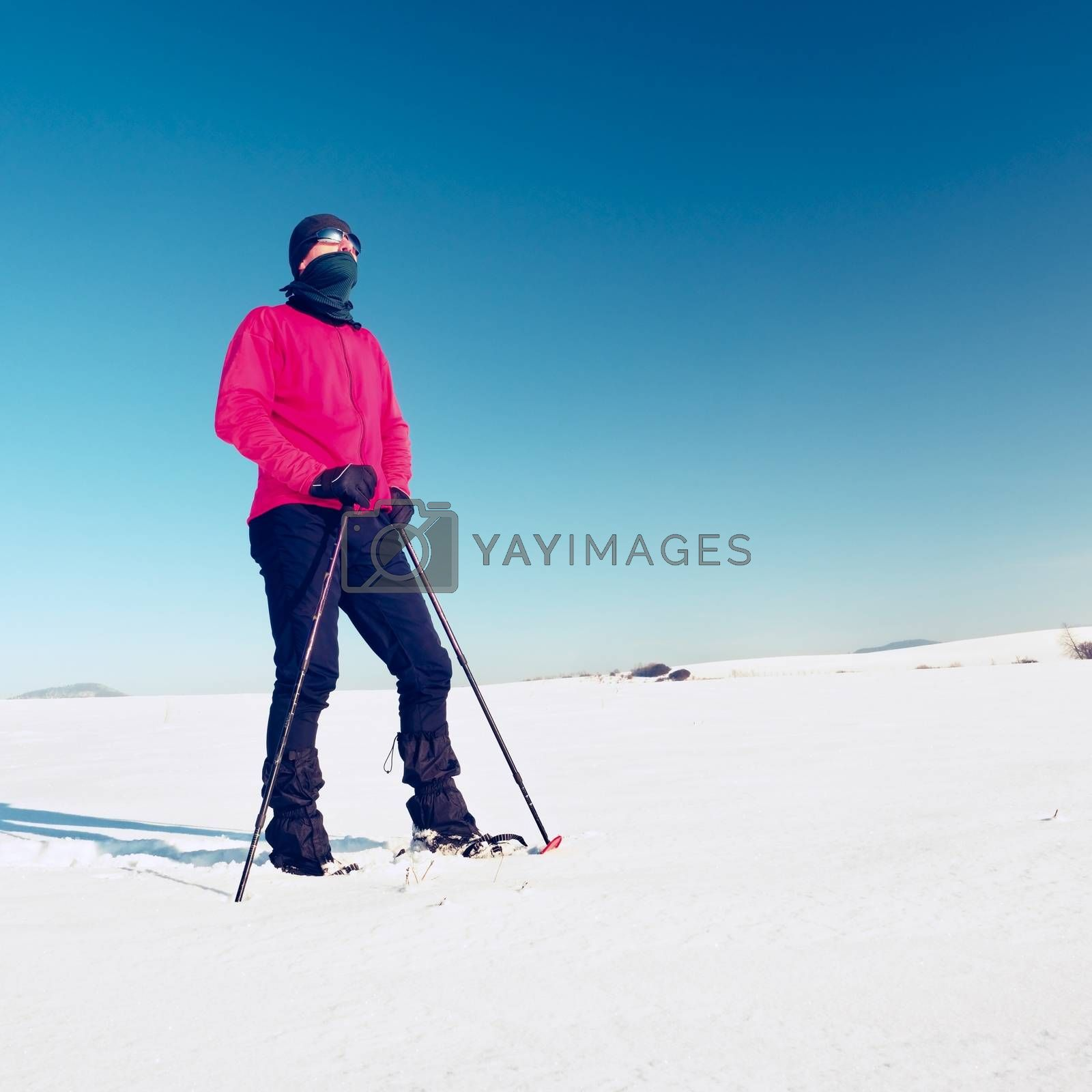 Winter tourist with snowshoes walk in snowy drift. Hiker in pink sports jacket and black trekking trousers snowshoeing in powder snow. Cloudy winter day, gentle wind brings small snow flakes.