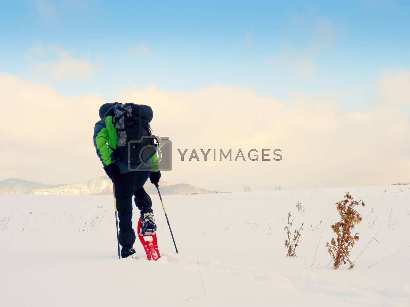 Man cleaning snowshoe. Hiker in green gray winter jacket and black trekking trousers walk in snowy filed. Snowshoeing in powder snow. Cloudy winter day, gentle wind brings small snow flakes