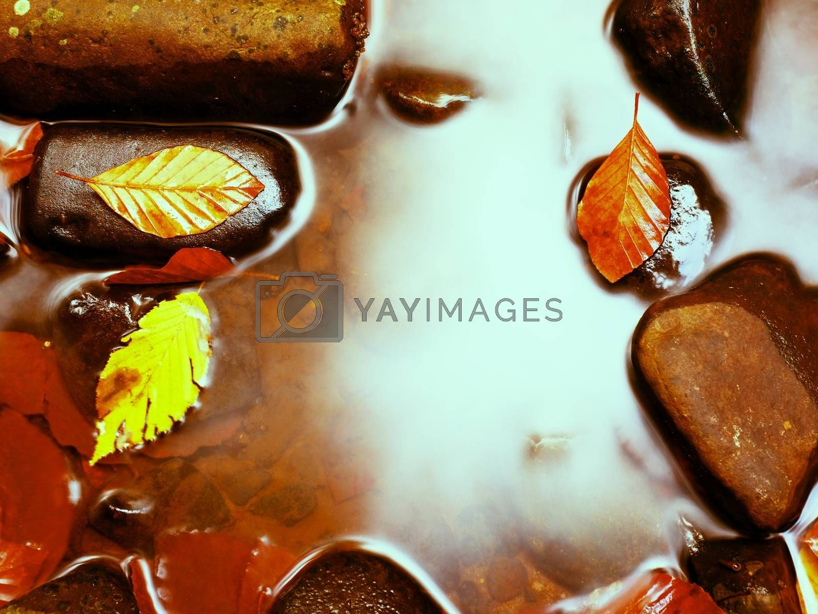 Filtered photo. Fall colors. Detail of gravel at mountain river covered with colorful autumnal leaves. Vivid colorful leaves  and poor mossy stones on river bank.