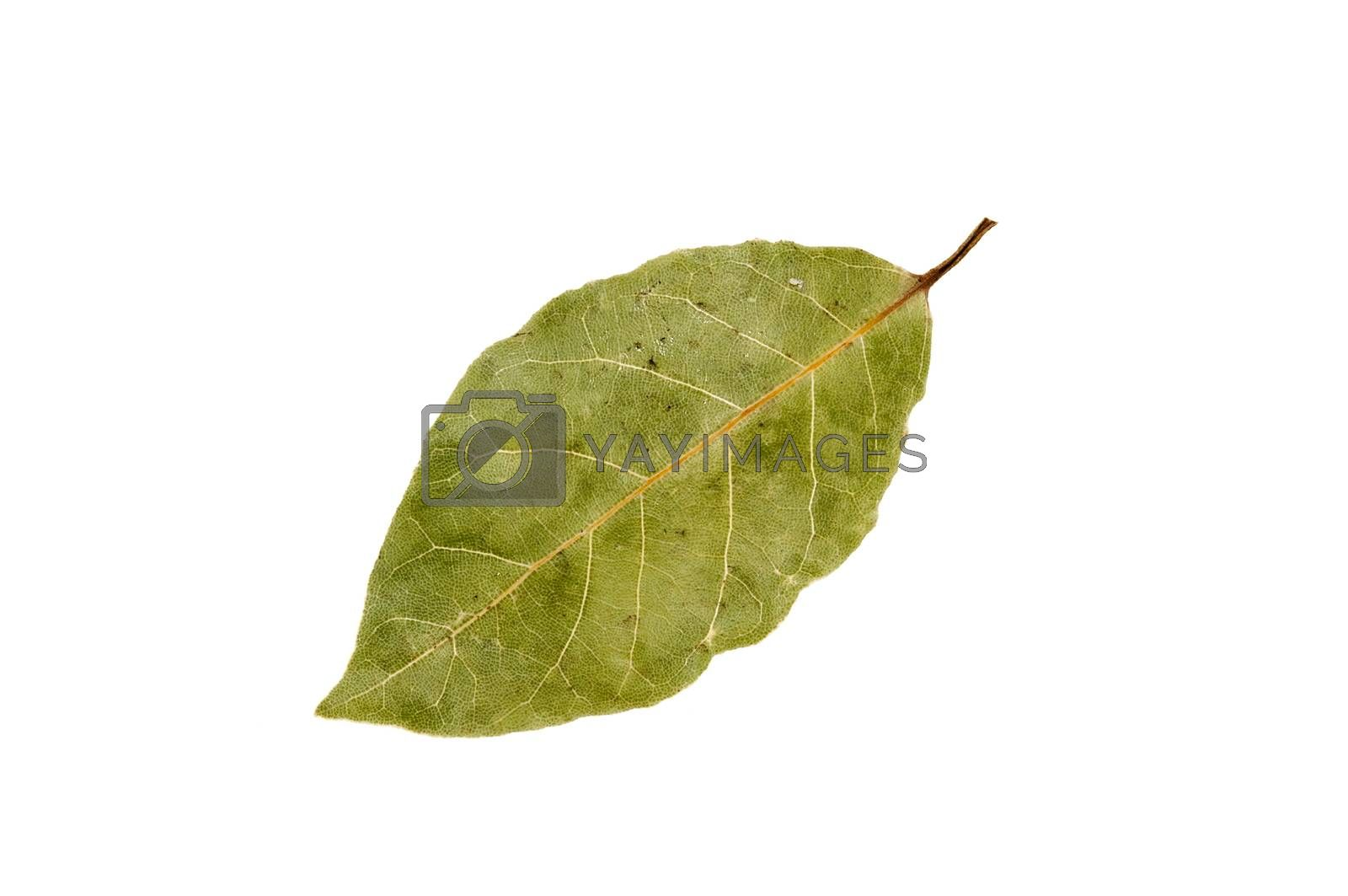 dried bay leaf isolated on a white background