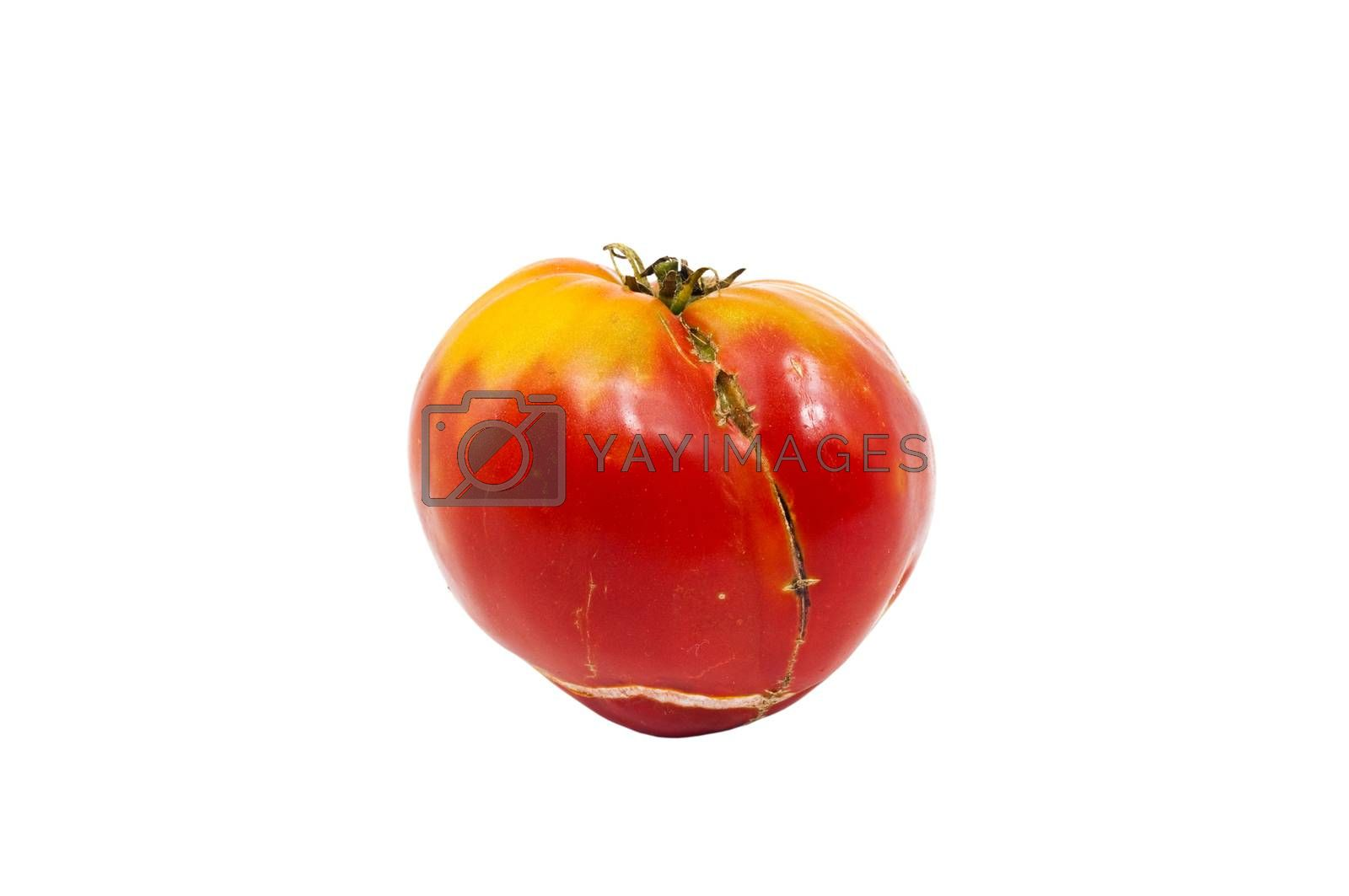organic tomatoes isolated on white background
