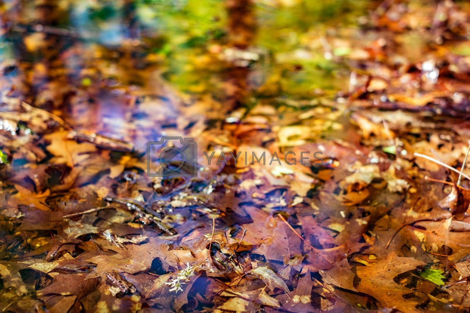 reflections in the lake of the forest