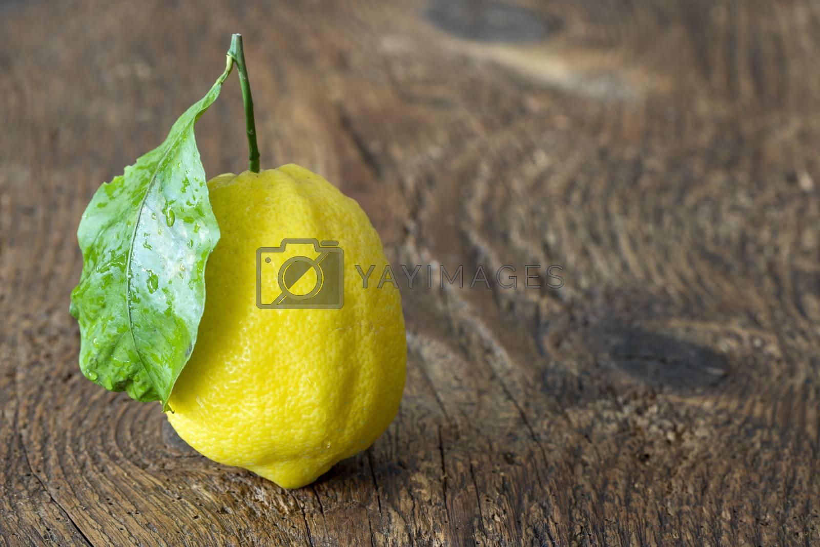 closeup of a amalfi lemon
