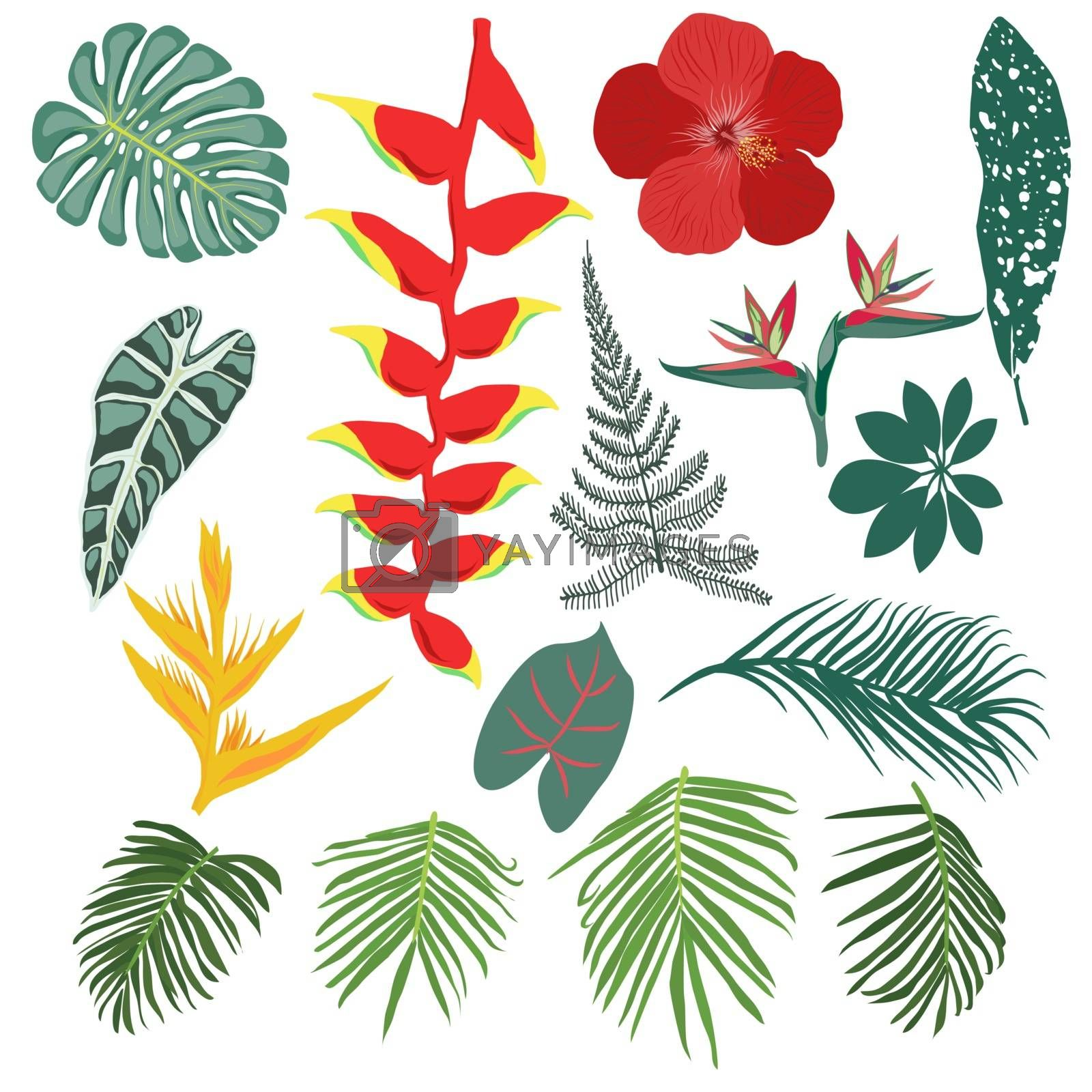 Tropical jungle leaves and flowers collection by Margolana