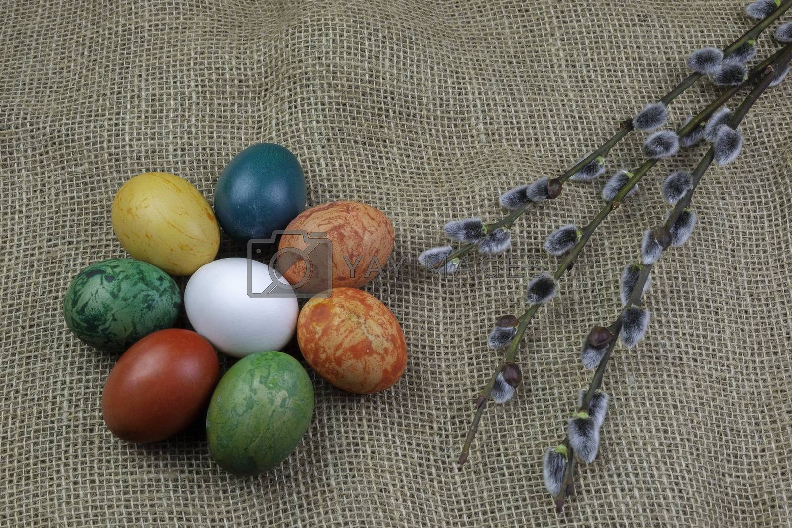 A view of eight differently colored Easter eggs with twigs of willow catkins