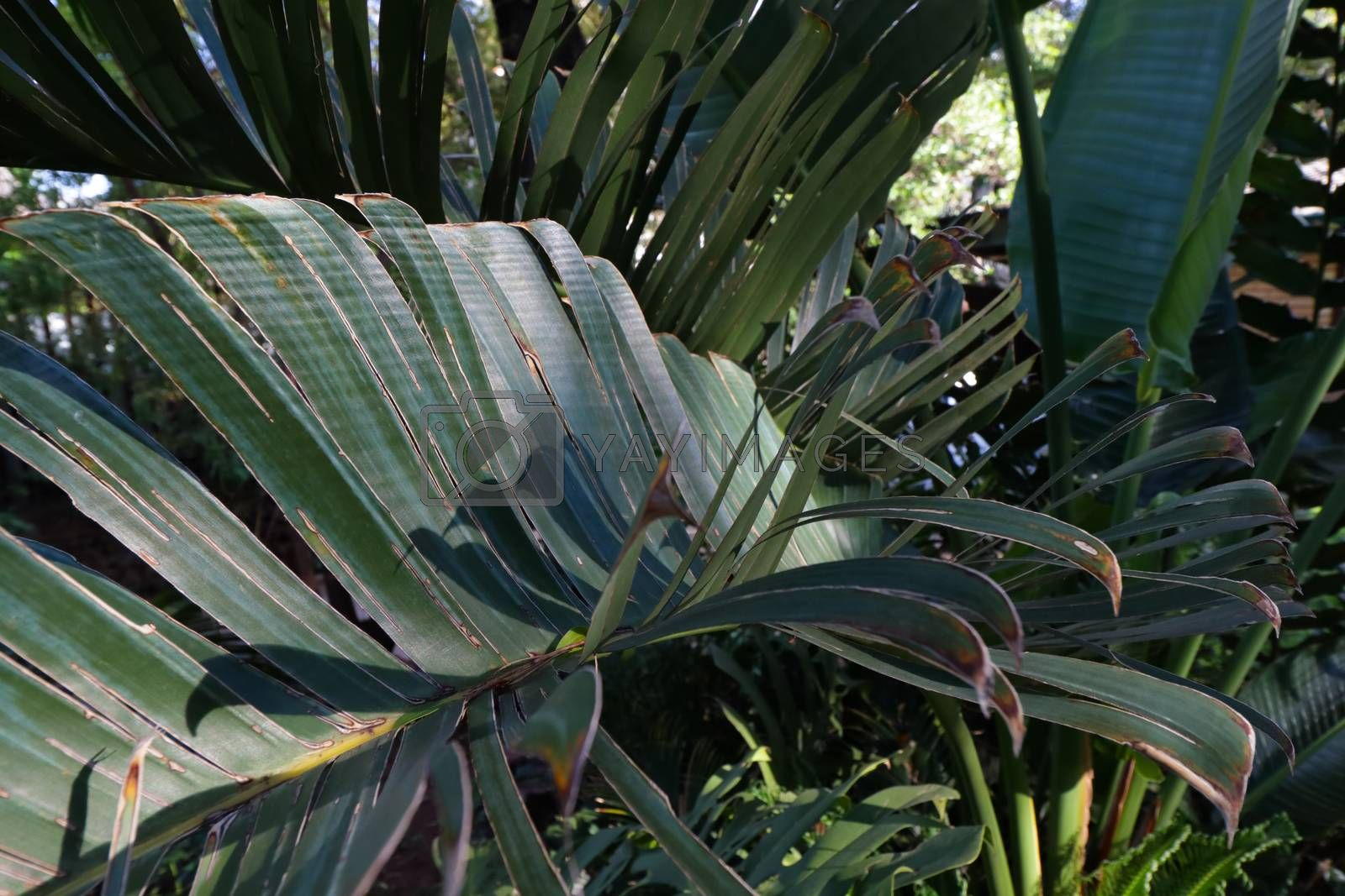 Variety of tropical green palm leaves and cycads, Pretoria, South Africa