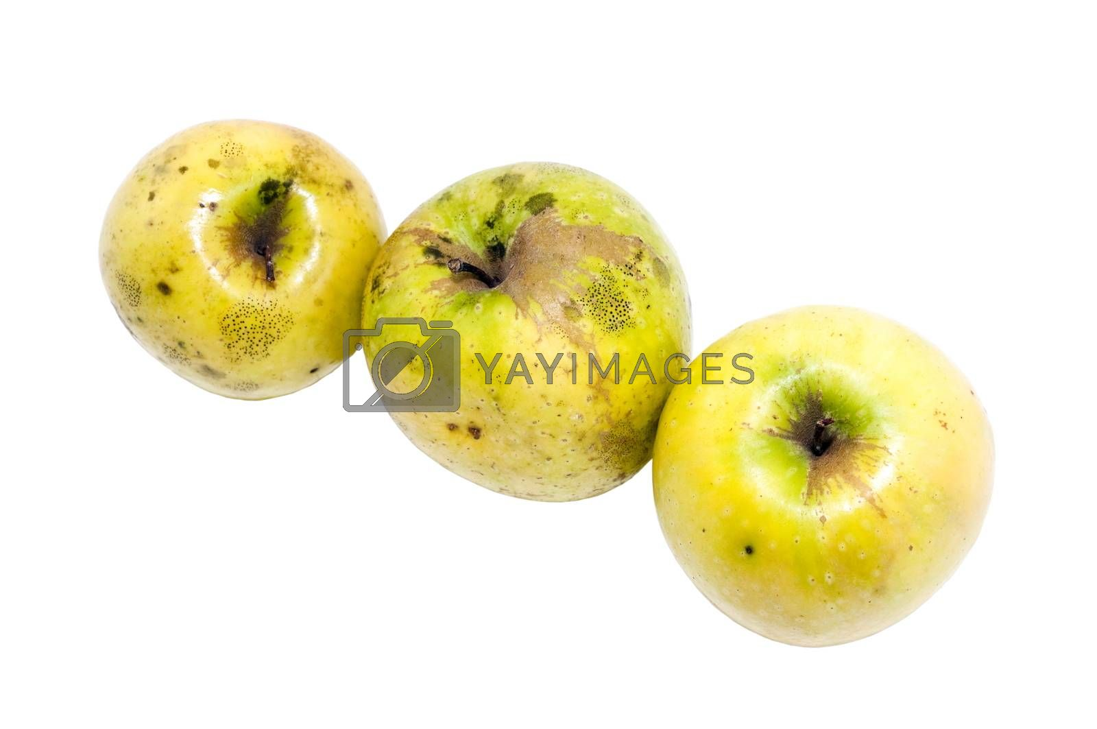 three yellow organic apples on a white background