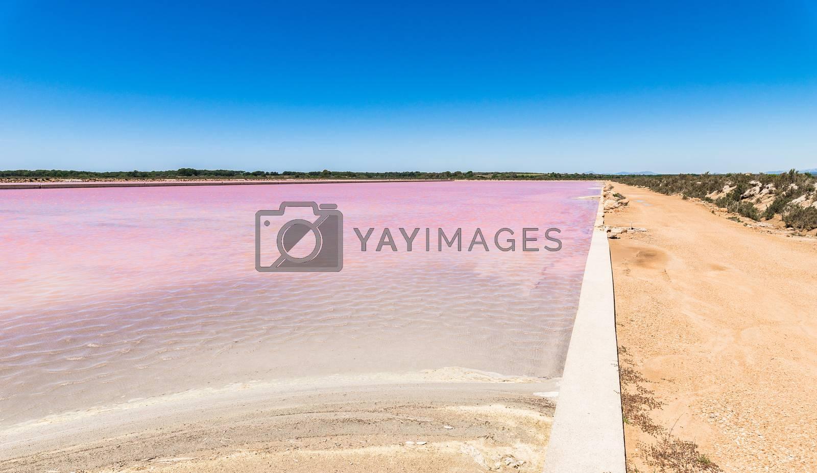 Purple colored salt basin at saline salt production