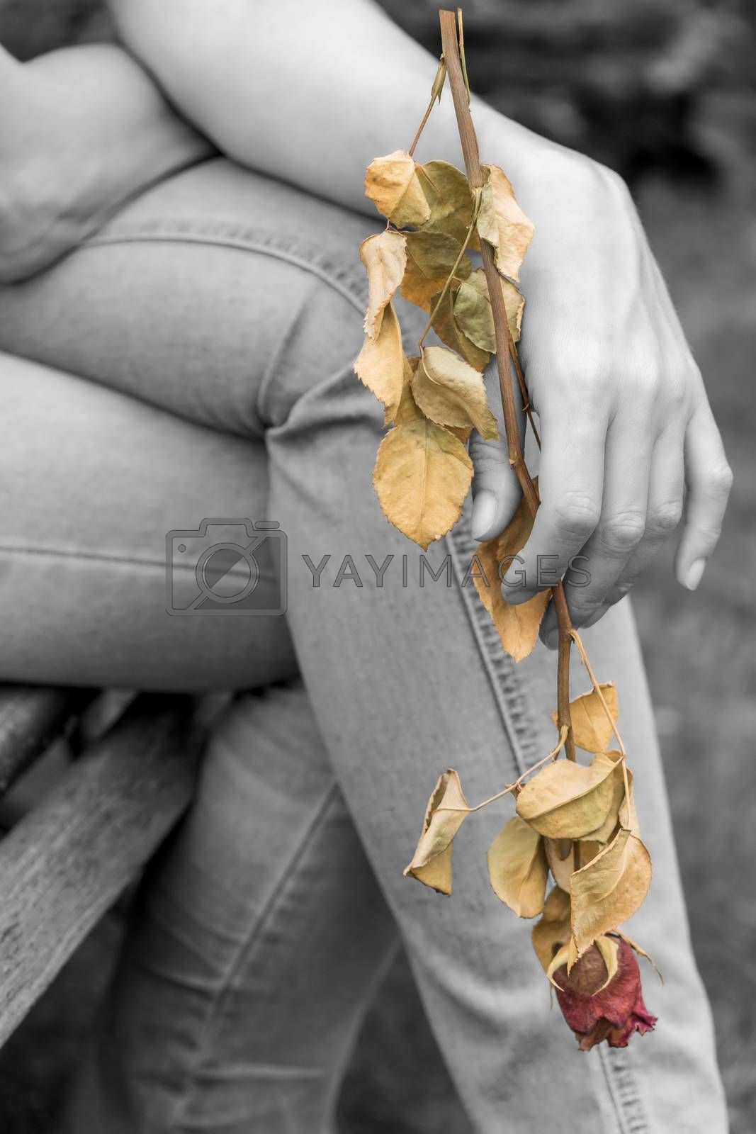 Woman is sitting on a bench and is holding a dry rose in her hand.  Edired the color splash effect.