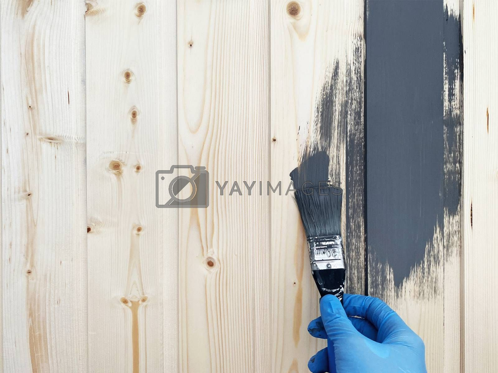 the right hand of worker in blue rubber gloves paints a wooden wall with brush of gray paint. Repair the surface.