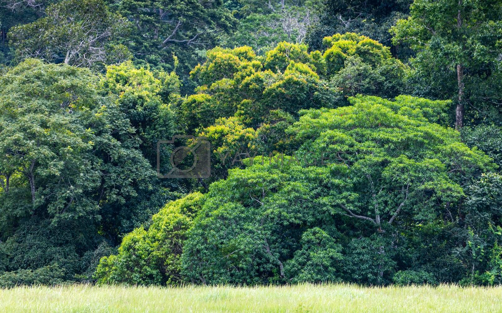 Landscape of green trees and bushes growing inside tropical rainforest.
