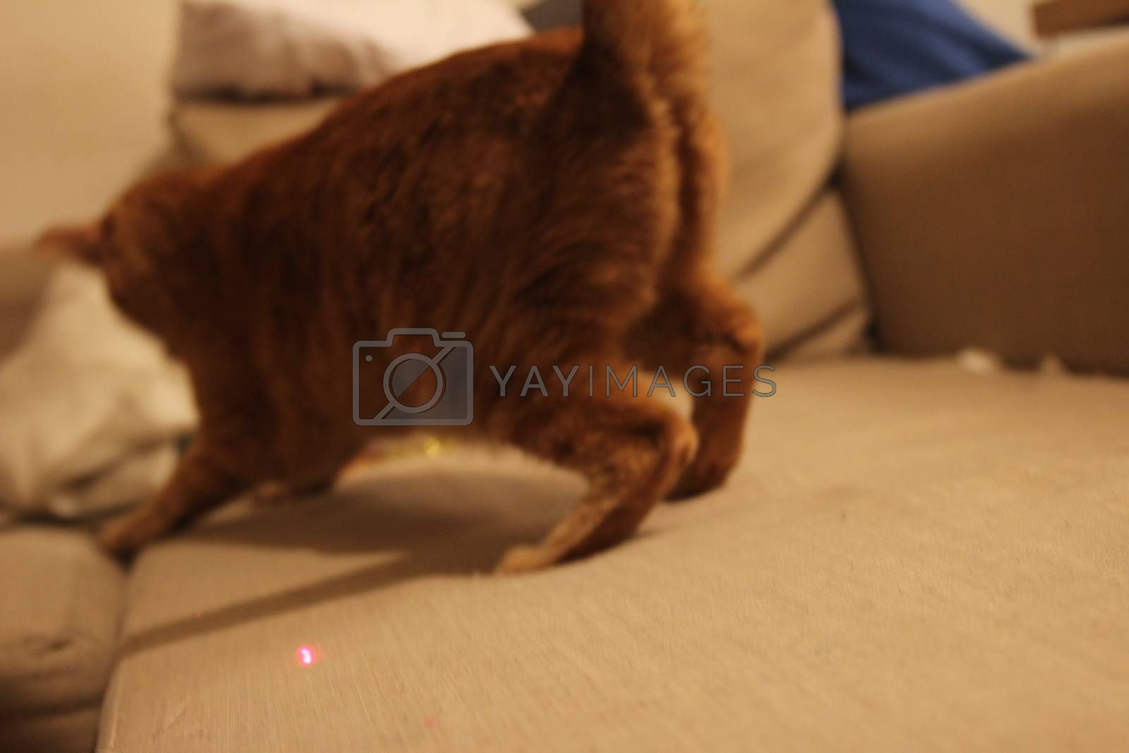 My Cat Spikey while playing, hunting and relaxing in the Sun. Photos are made in my house in Vienna