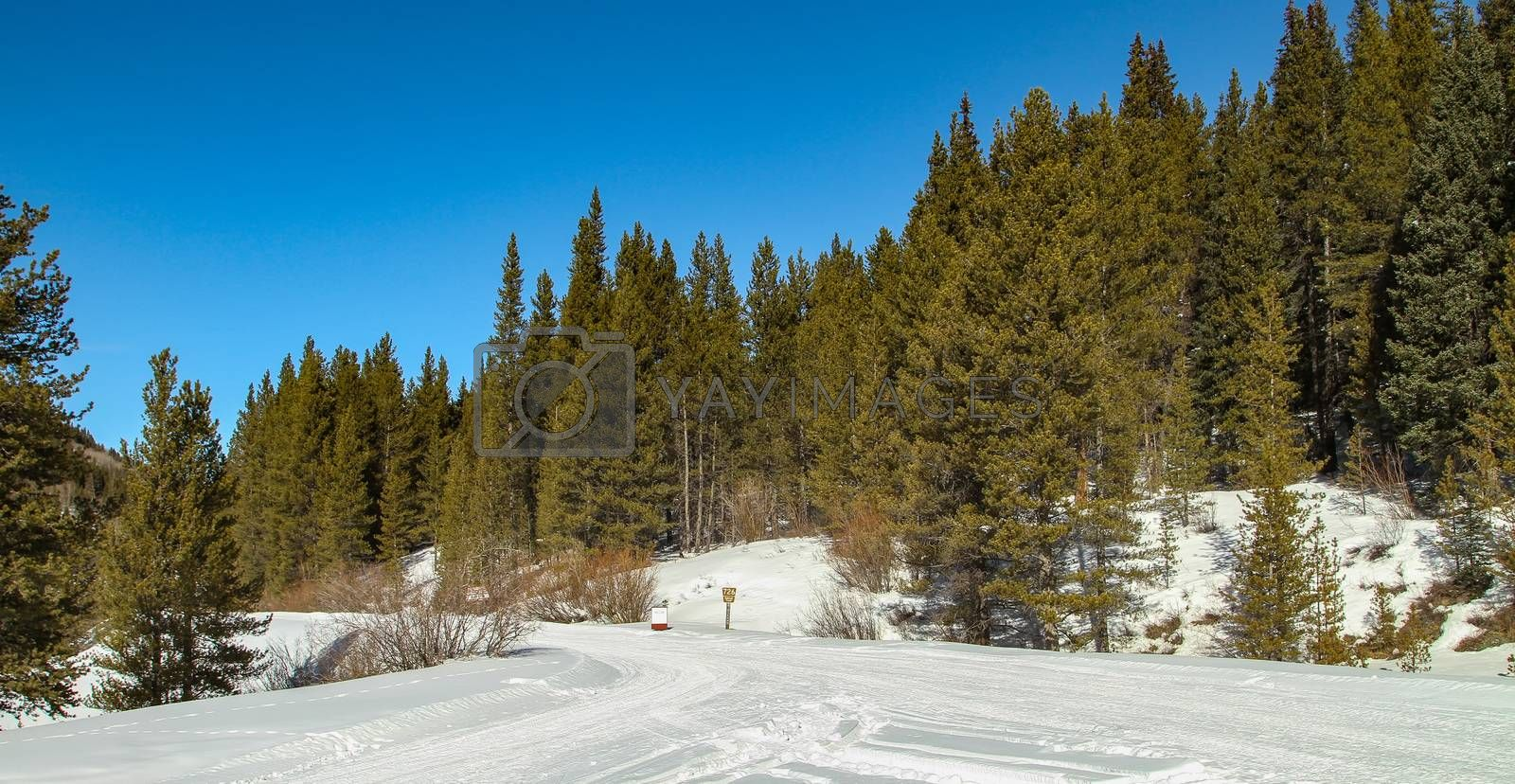 Snow mobile trails near Camp Hale, Colorado ready to be used.  Cold winter day in the forest.