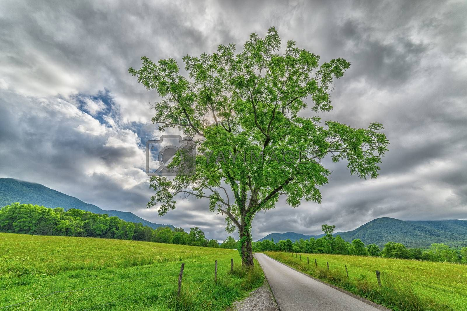 A beautiful horizontal shot of a Cades Cove tree in Springtime with a cloudy sky and mountains in the background.
