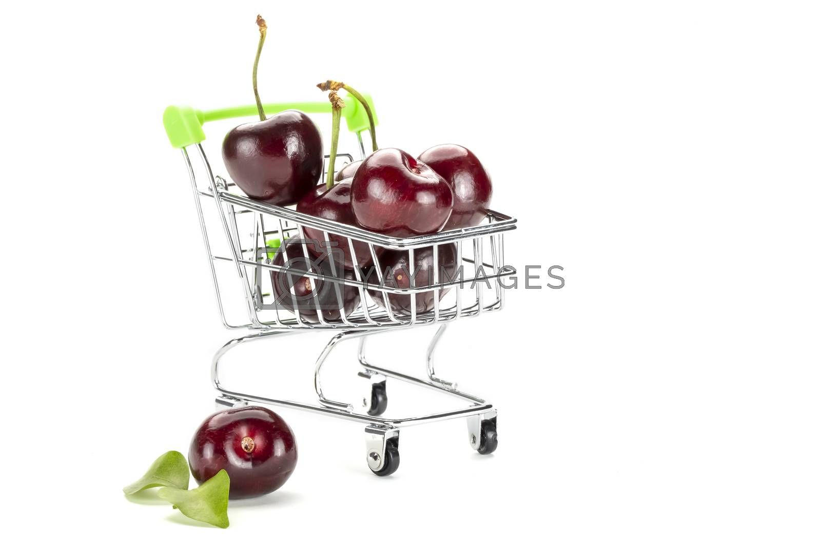 A bunch of dark red fresh cherries on a toy shopping cart. Isolated on white background.