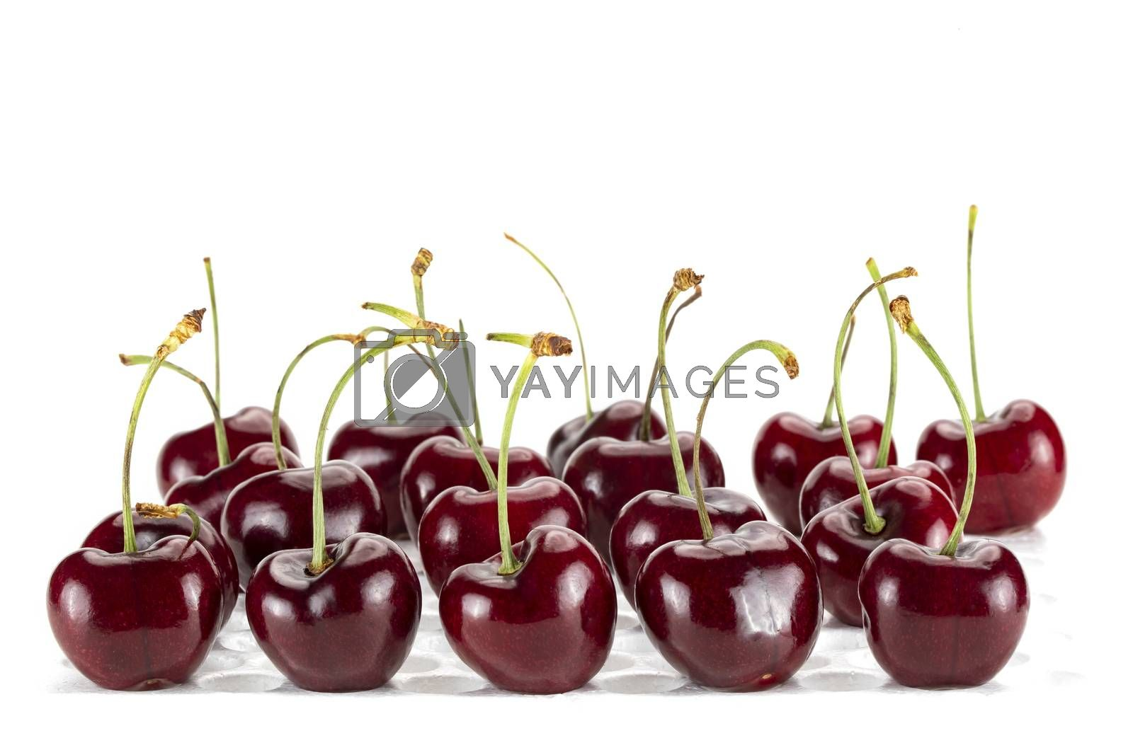 Rows and columns of fresh cherries. Isolated on white background.