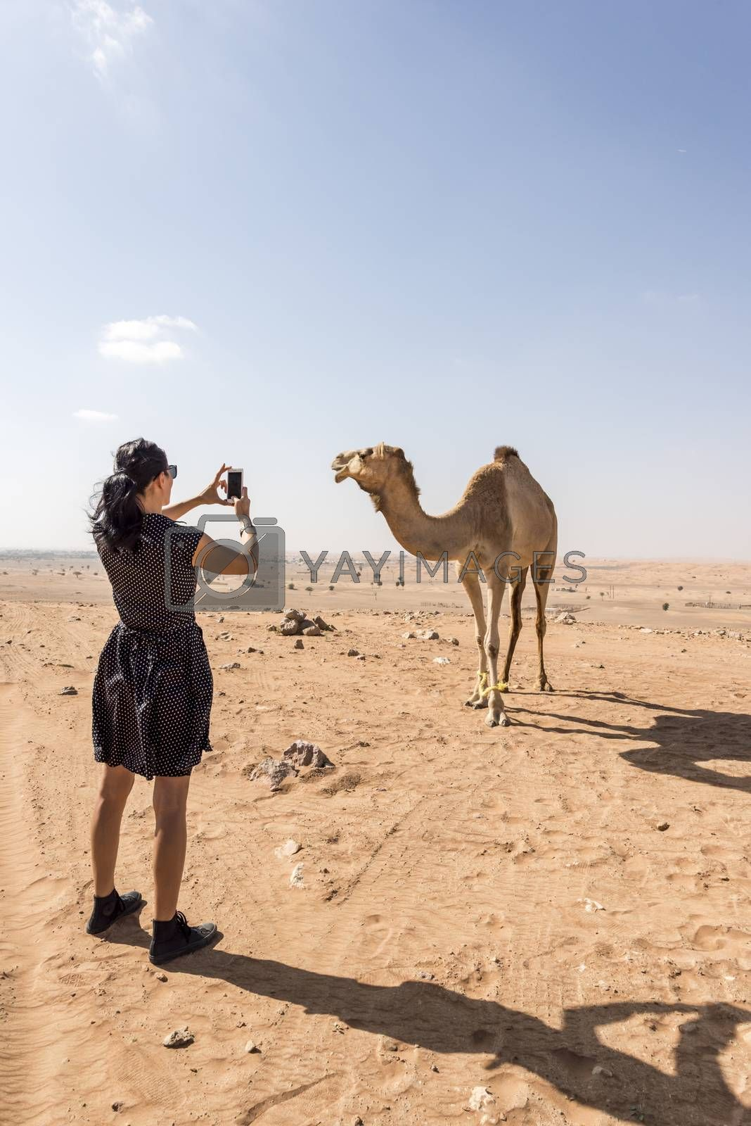 Woman taking photographs of Camel in the desert