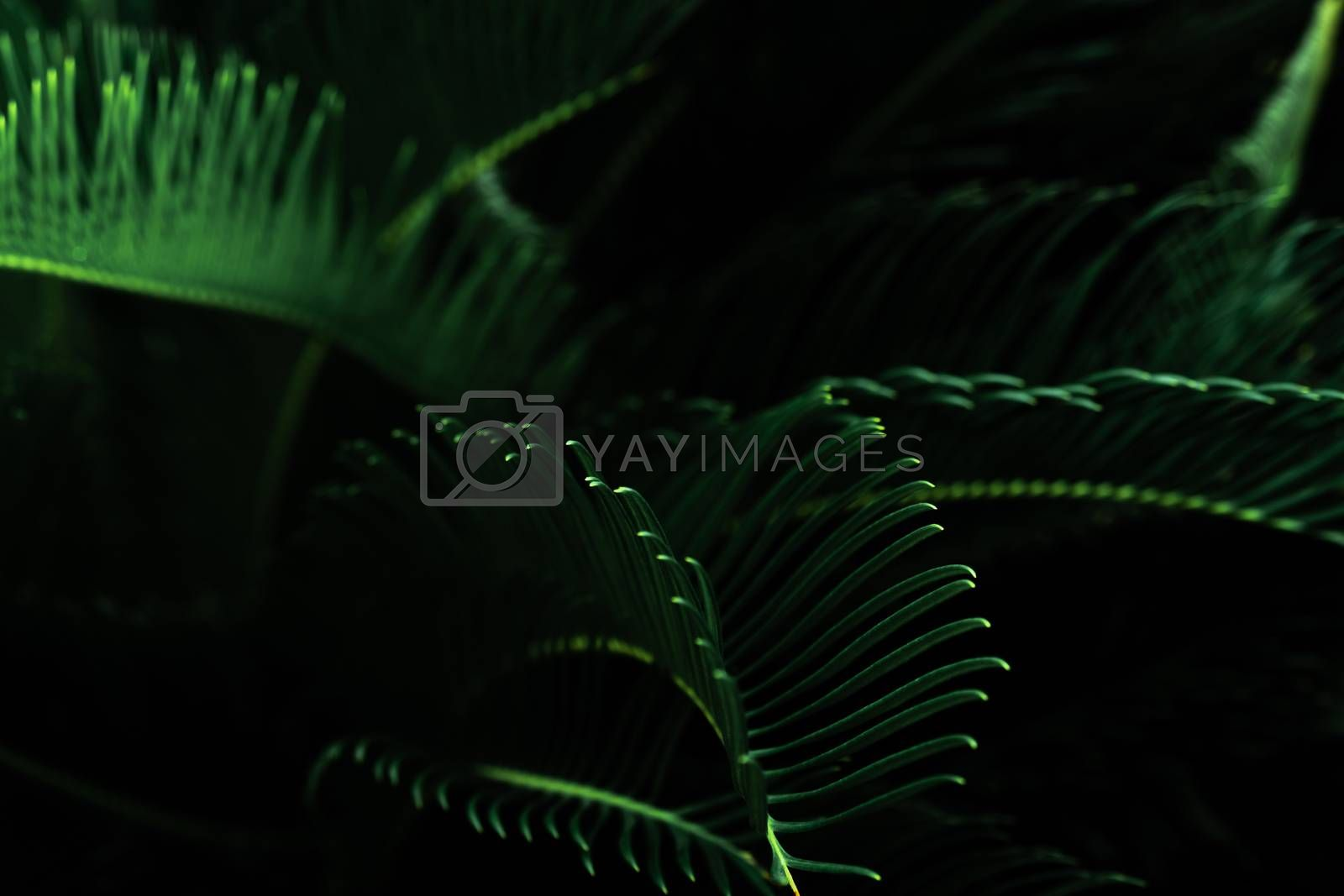 Dark green leaves in the garden. Green leaf texture. Nature abstract background. Tropical forest. Above view of dark green leaves with natural pattern at night. Tropical plant wallpaper. Greenery