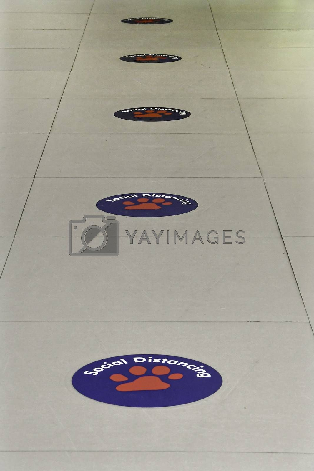 Perspective view of social distancing floor markers in an office building during the covid 19 pandemic.