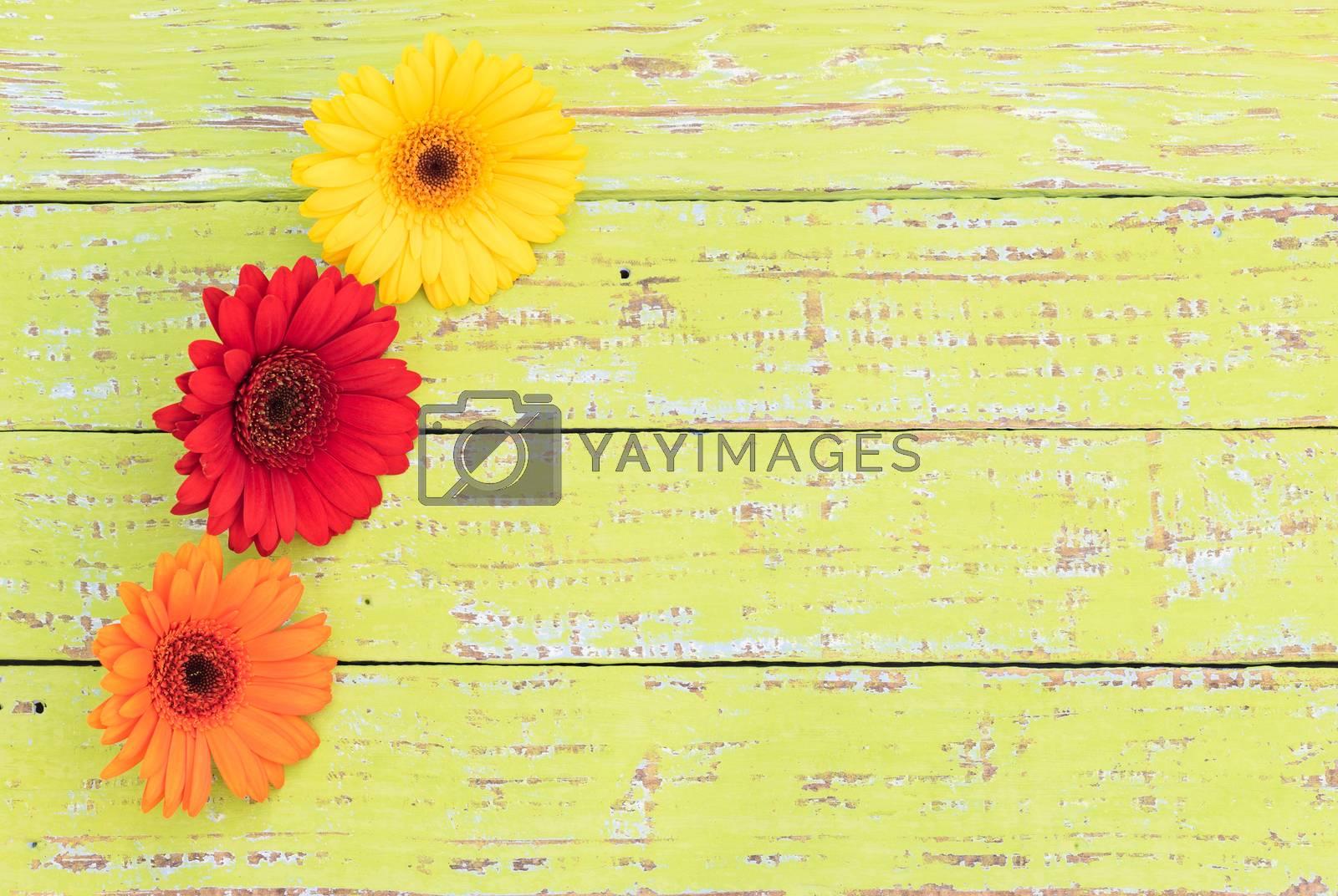 Beautiful gerbera flowers over green wooden background