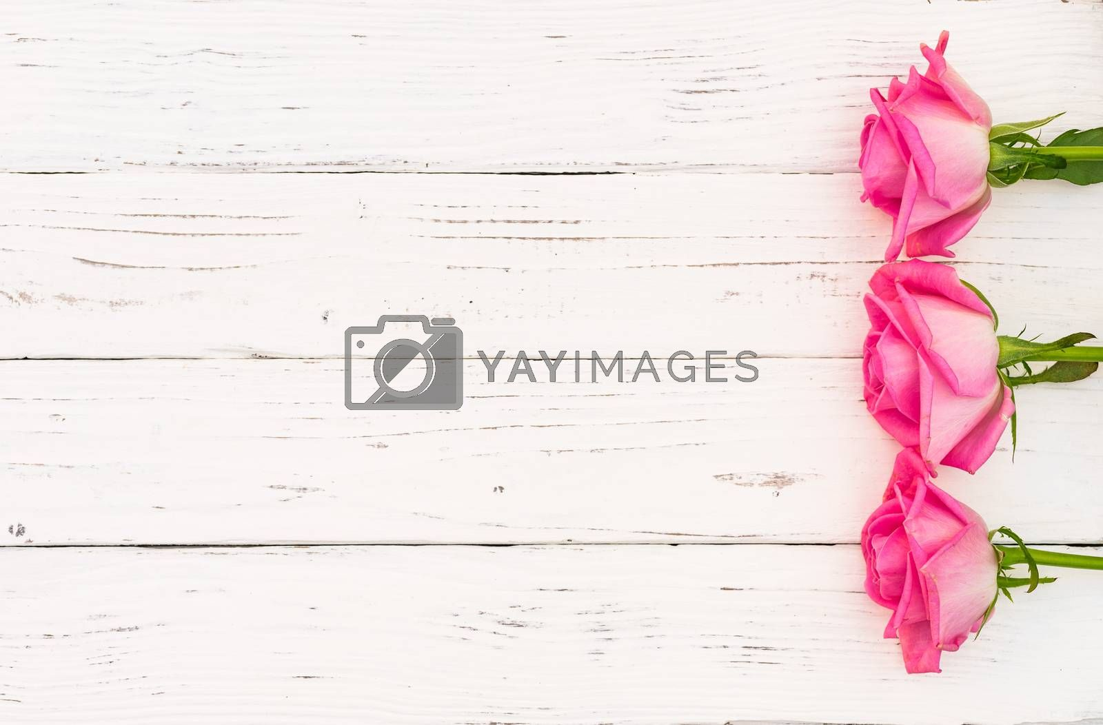 Romantic pink roses on white wooden background with copy space