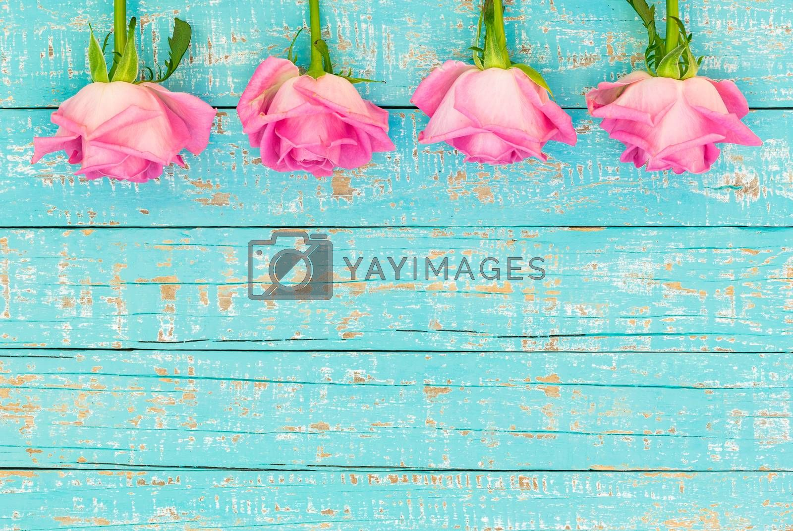 Pink roses frame on turquoise wooden background with copy space
