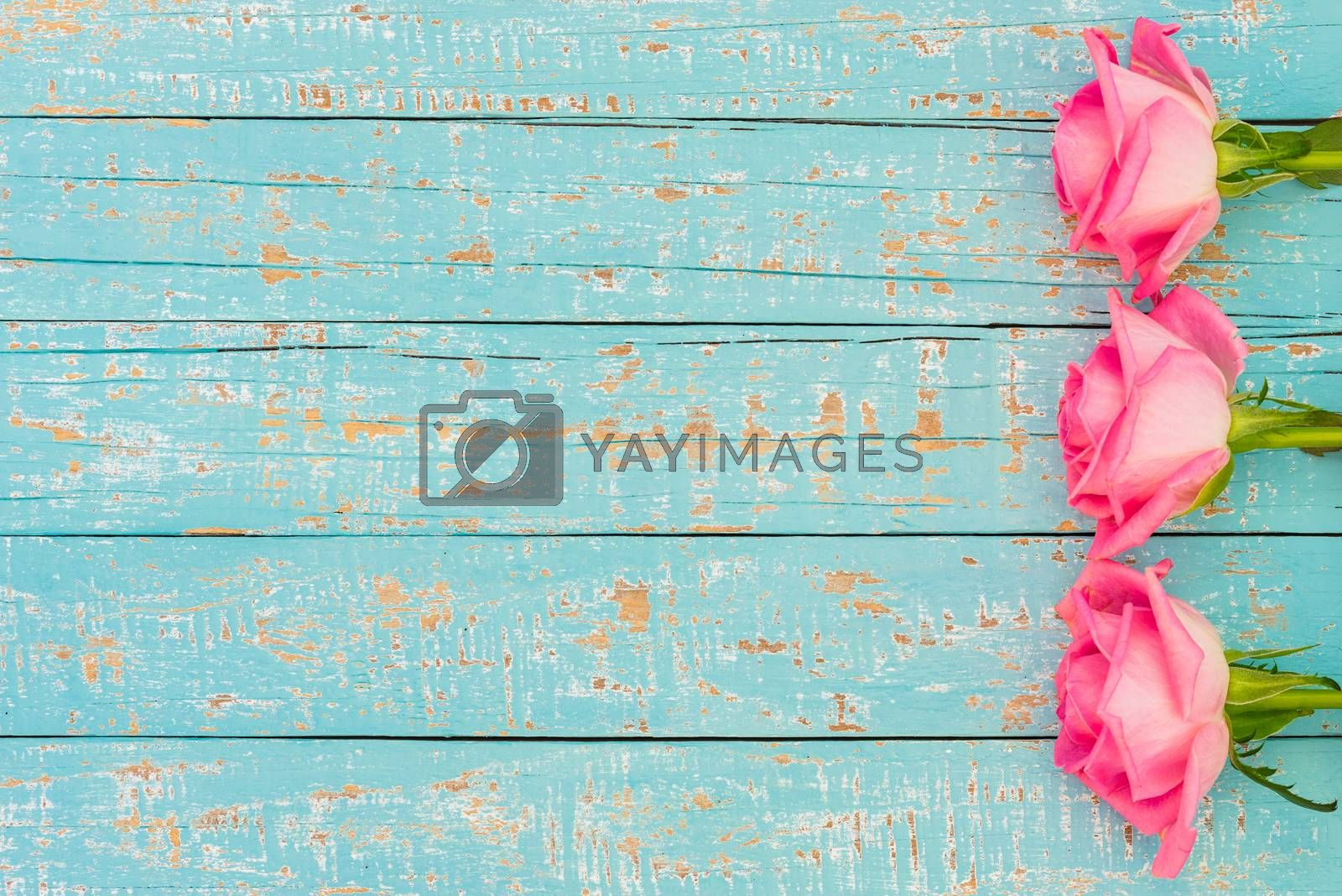 Pink roses side border on turquoise wooden background with space for text