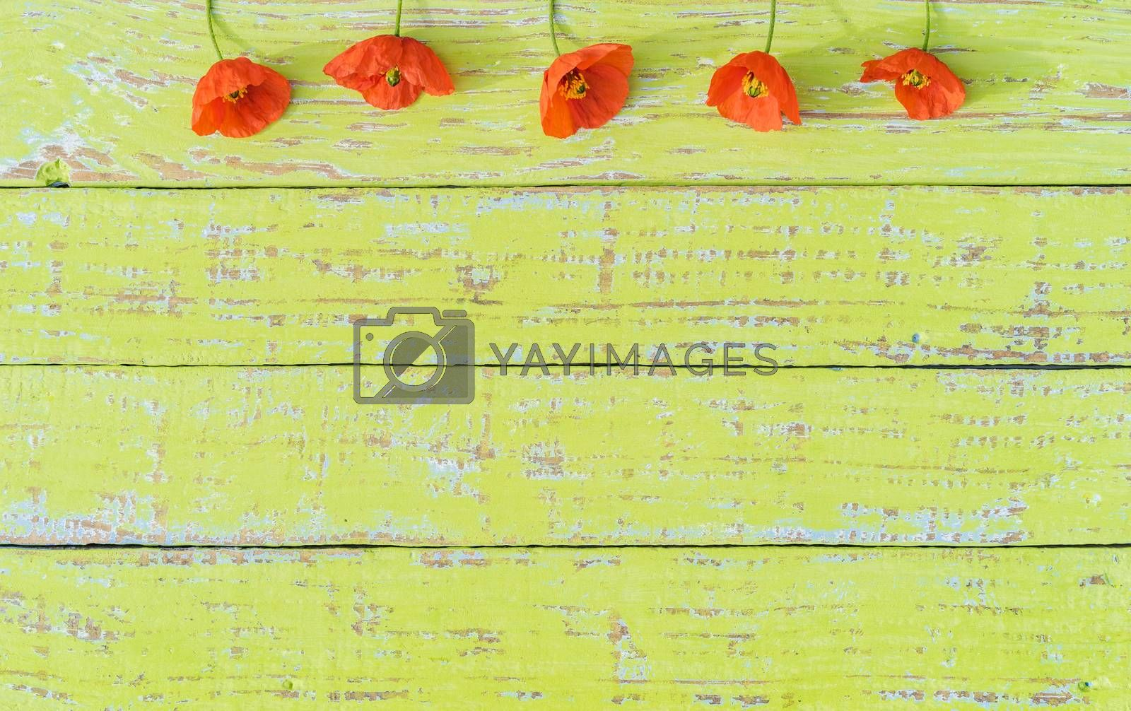 Romantic flower background with orange poppy flowers on green wood with copy space