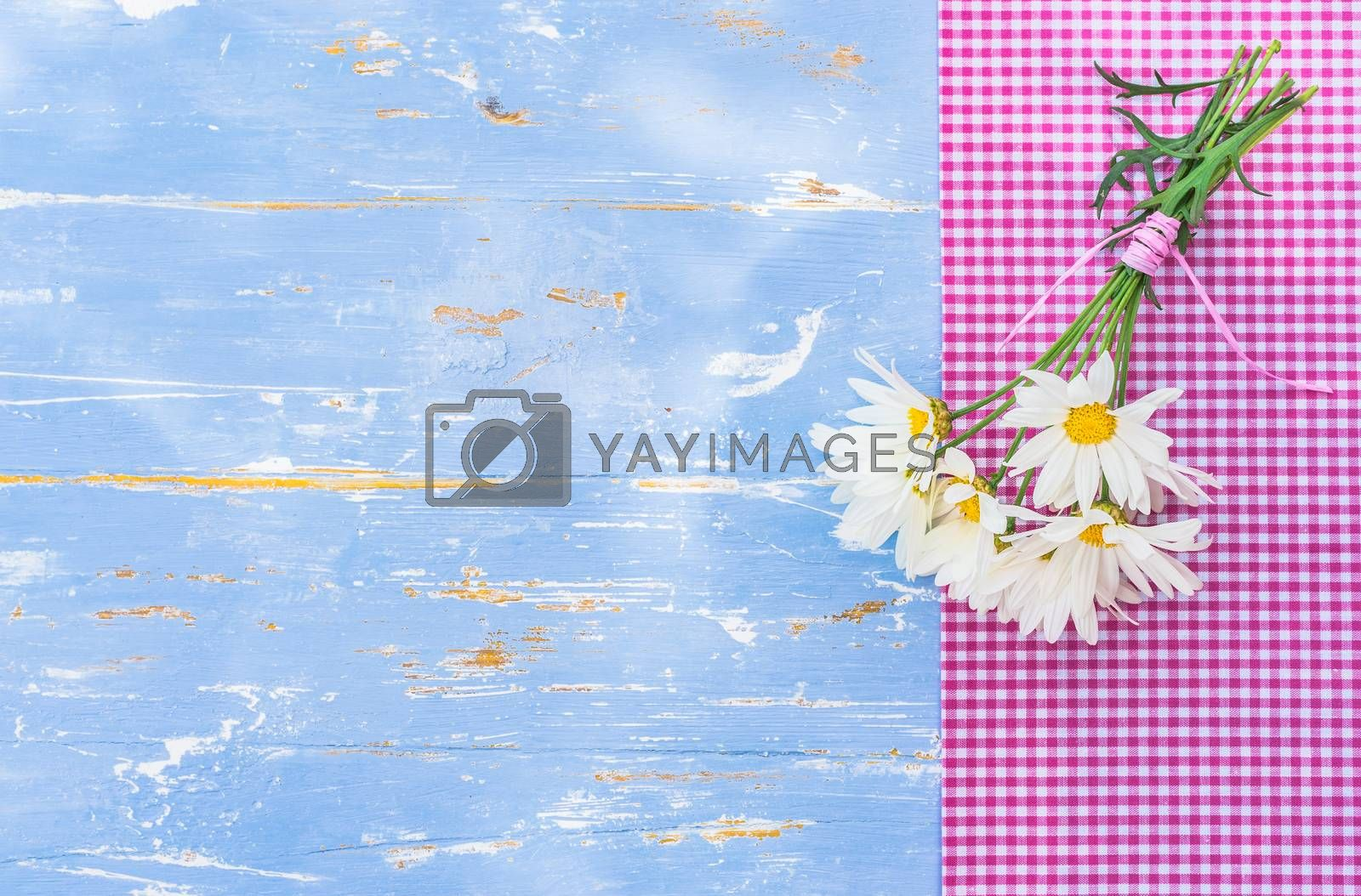 Bunch of marguerite daisy flowers on blue background with copy space