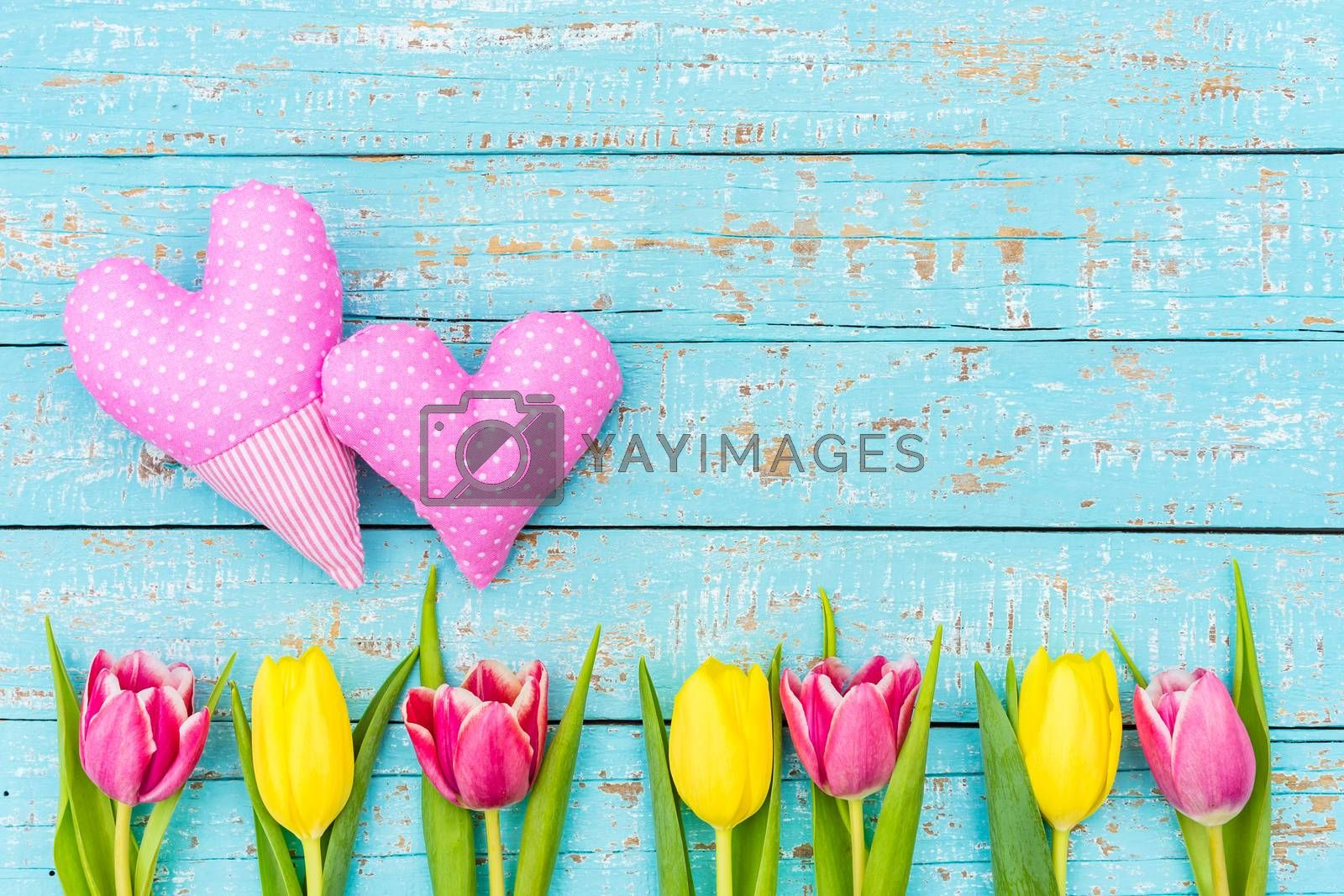 Two pink hearts with tulip spring flowers on blue wooden background with space for text