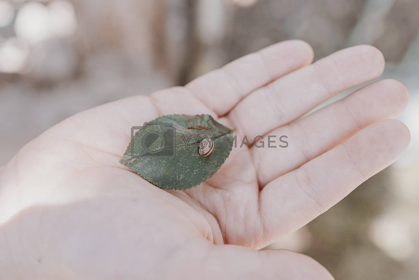 a small snail on a green leaf on a child's hand on a warm summer day