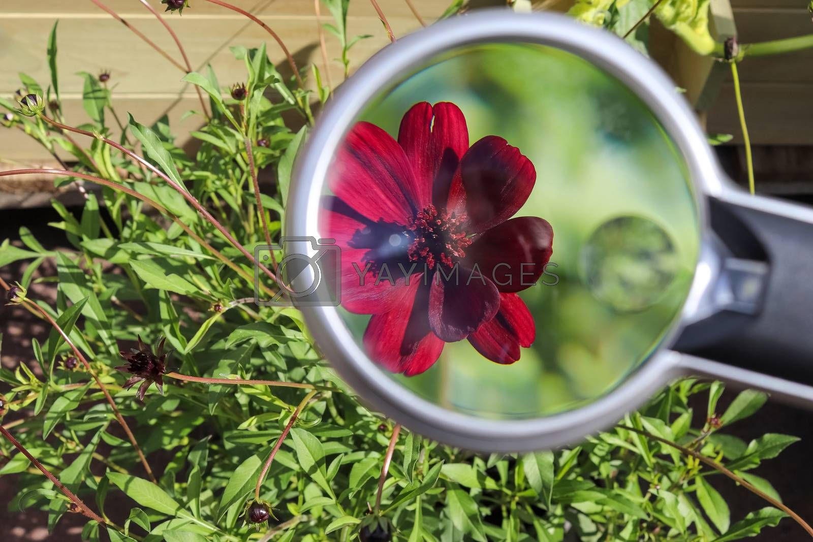 Beautiful and colorful flowers zoomed at with a magnifying glass