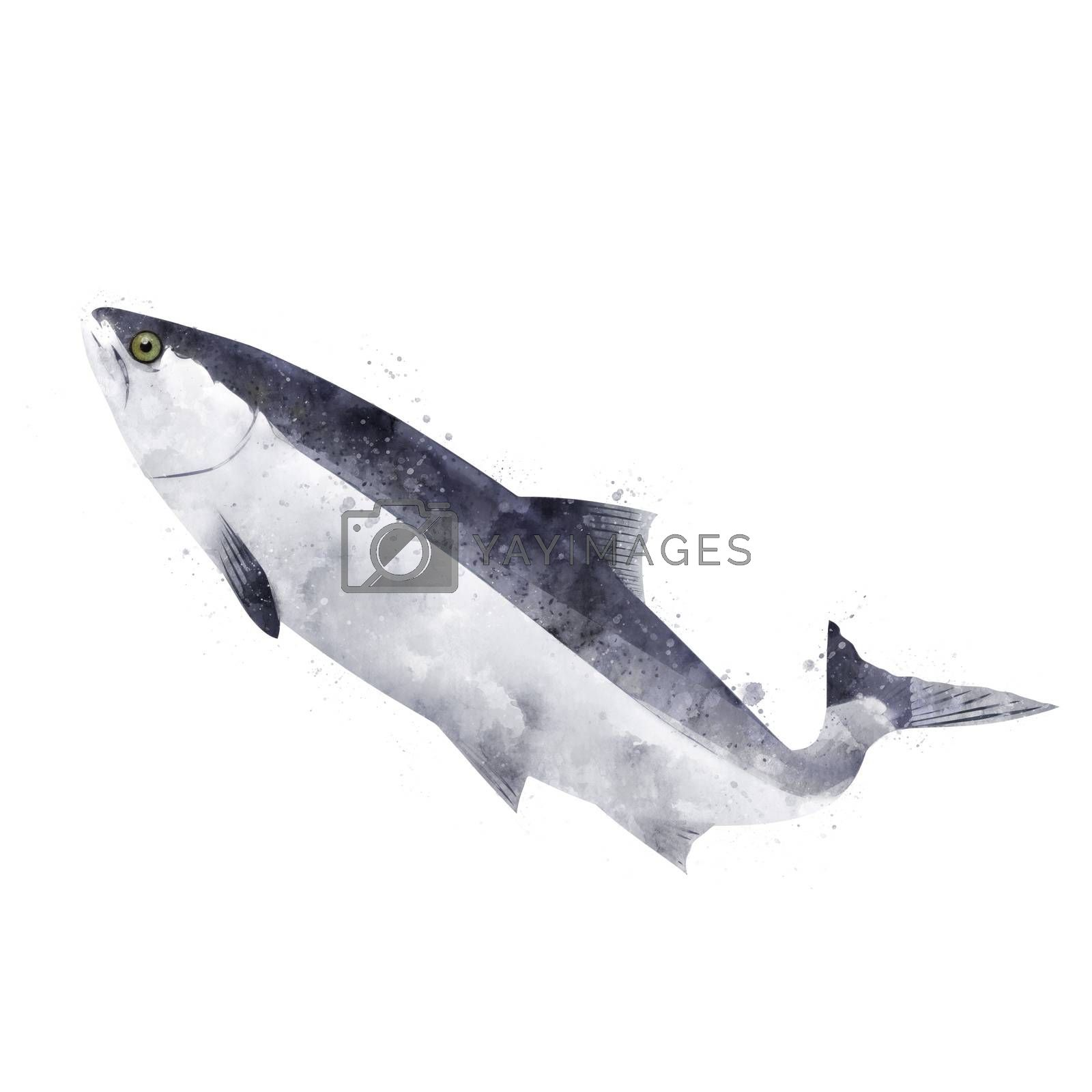 Pink Salmon, isolated raster illustration in watercolor style on a white background.