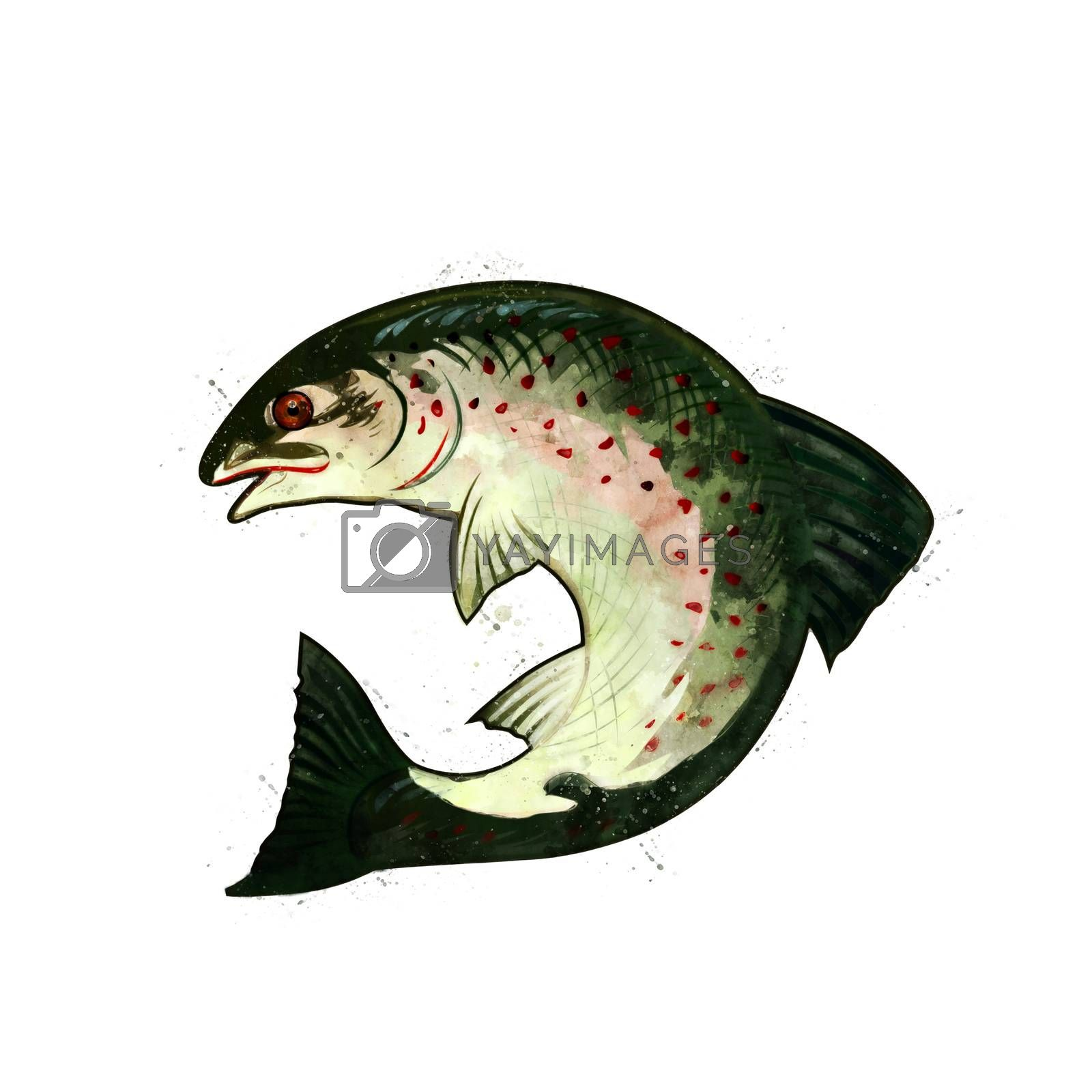 Salmon, isolated raster illustration in watercolor style on a white background.