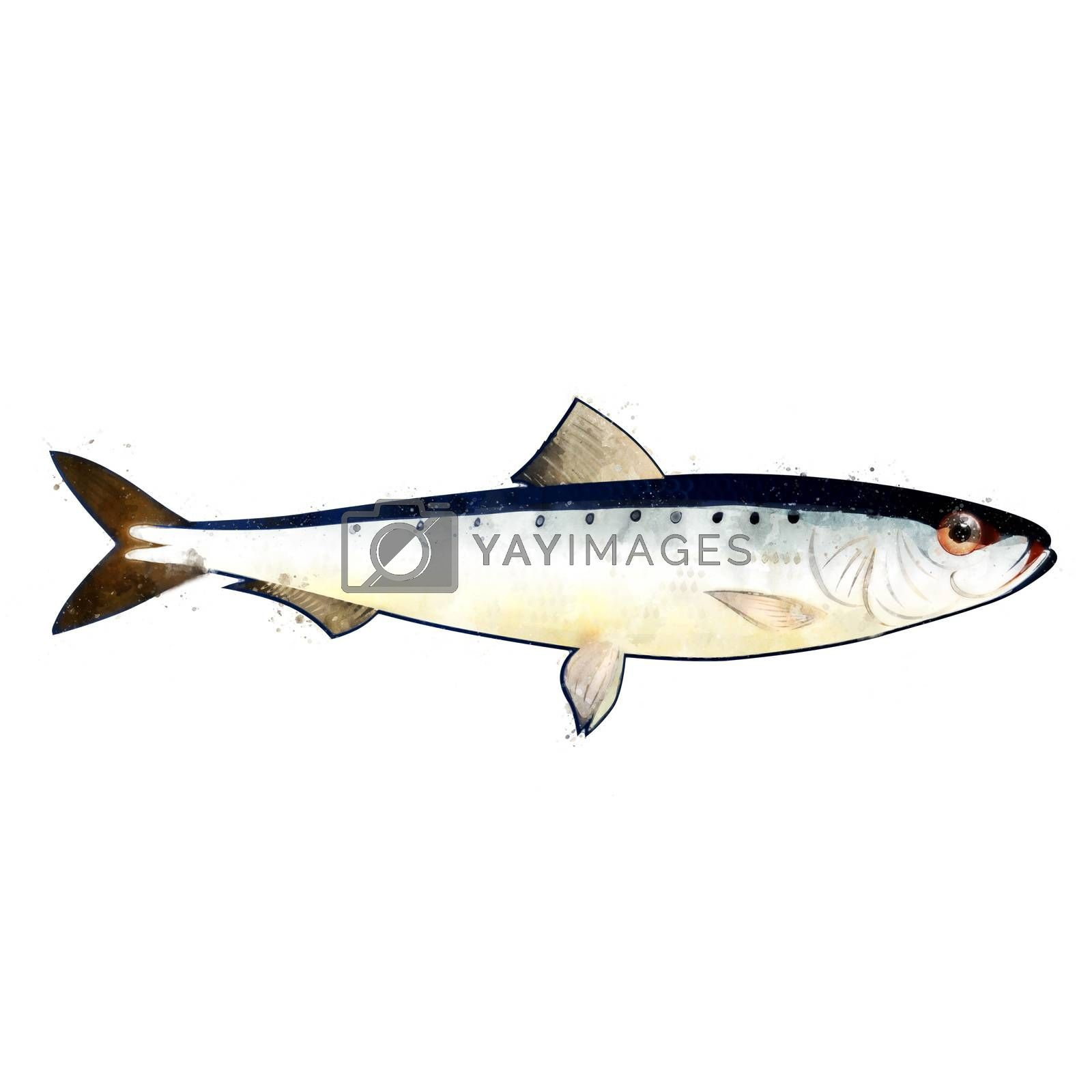 Sardine, isolated raster illustration in watercolor style on a white background.