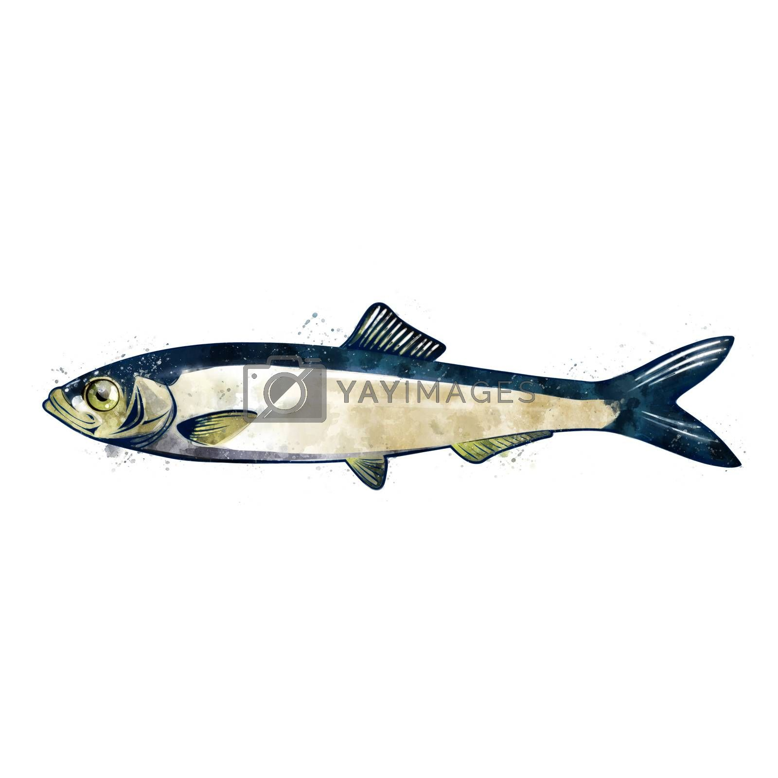Sprat, isolated raster illustration in watercolor style on a white background.