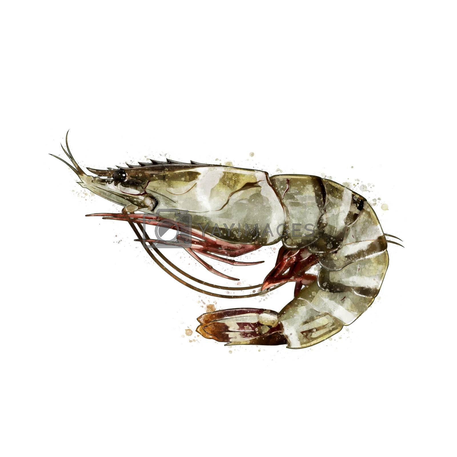 Tiger Shrimp, isolated raster illustration in watercolor style on a white background.